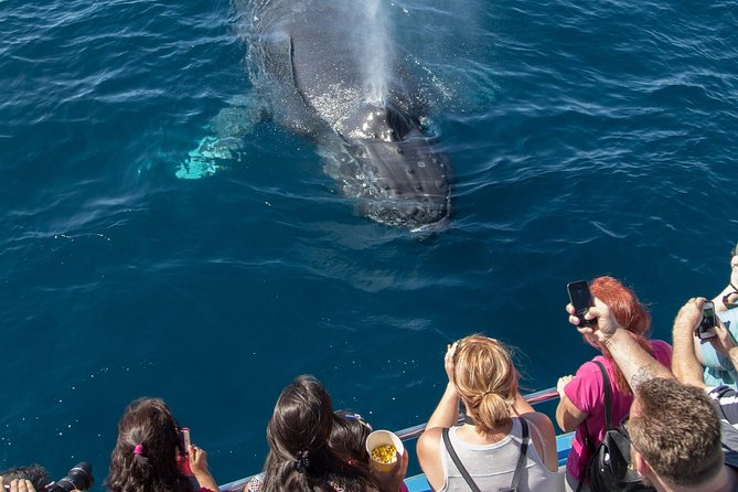 Hop aboard a 65-foot (20-meter) whale-watching boat for a fantastic adventure off the Orange County coast! During your whale-watching cruise, learn fascinating details about California sea life from the crew, and enjoy the Pacific Coast scenery. Year-round whale-watching cruises like this one are rare, so don't miss this chance to see giant blue, finback, grey, minke and humpback whales, along with other marine life like dolphins, on this 2.5-hour tour from Newport Beach.