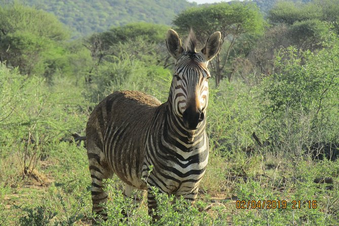 On this 3 Days Wildlife Safari clients can expect to enjoy them self witha day of game-viewing in Etosha National Park. <br>Etosha National Park that is situated in northern side of Namibia which offers you the chance to spot wild animals. you will be enjoying a African wildlife adventure in Namibia during day and night game drives. You will be side seeing wild animals like Elephants,Hippo, Giraffe and Lion on the waterholeswith amphitheatre-like atmosphere and floodlights at the Rest Camps inside Etosha National Park.You can hear water sound at the waterhole. It's a little Baby Rhino on its way to have a drink and bath, followed by its mother and some springboks.