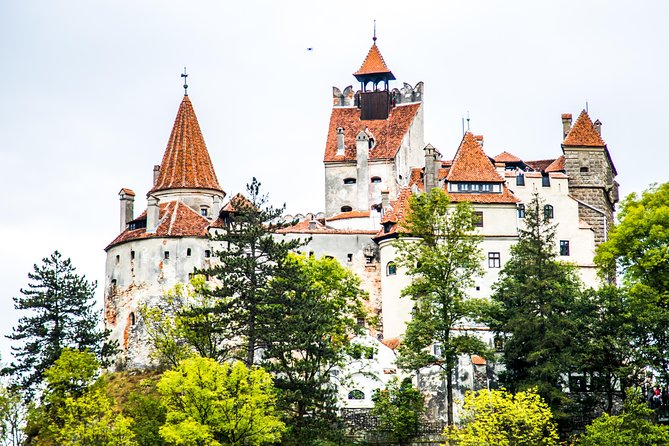 Meet the Free Bears and visit Dracula's Castle in a Day Trip from Bucharest, Bucarest, RUMANIA