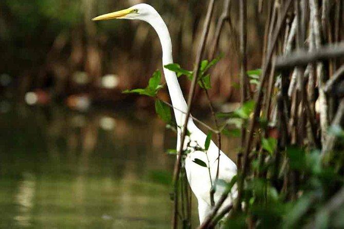 Excursión en canoa en los manglares, Cartagena de Indias, COLOMBIA