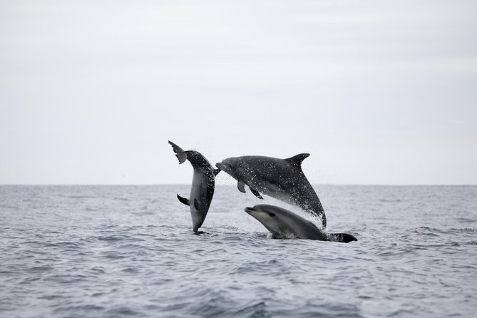 Half-Day Whale and Dolphin Watching Tour, ,
