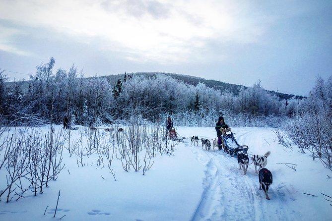 Drive Your Own Dog Team - 2 Hour Dog Sledding Tour, Fairbanks, AK, ESTADOS UNIDOS