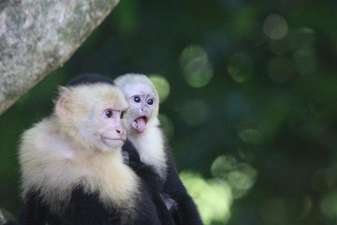MÁS FOTOS, Manuel Antonio National Park Tour with pick up included