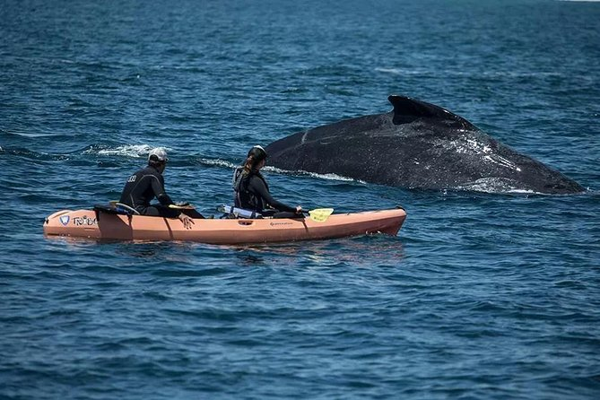 Come paddle for fun, fitness, relaxation or imagination! See the ever adorable southern sea otter, whales lunge feeding, or enjoy the rowdy sea lions as they porpoise through the waves.<br>