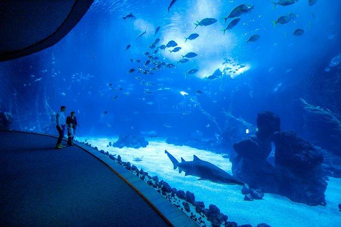 Entrada al acuario de Poema del Mar y visita a la ciudad de Las Palmas de Gran Canaria., Gran Canaria, ESPAÑA