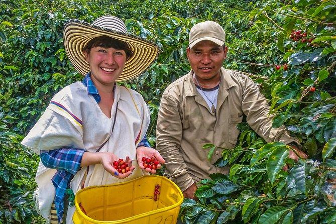 MÁS FOTOS, Recorrido sobre el café: Pruebe y viva la auténtica experiencia de café colombiano