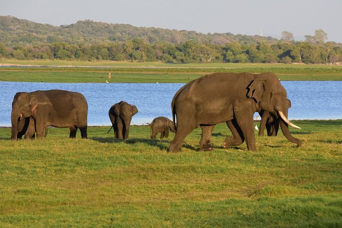 Jeep Safari To Udawalawa National Park, ,
