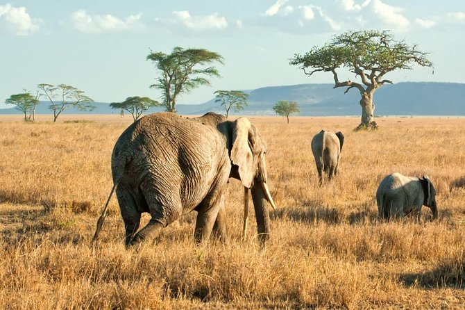 It's a short tour in a an amazing reserve of Serengeti and that clients will enjoy within a short period of time.
