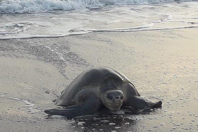 MÁS FOTOS, turtle tour