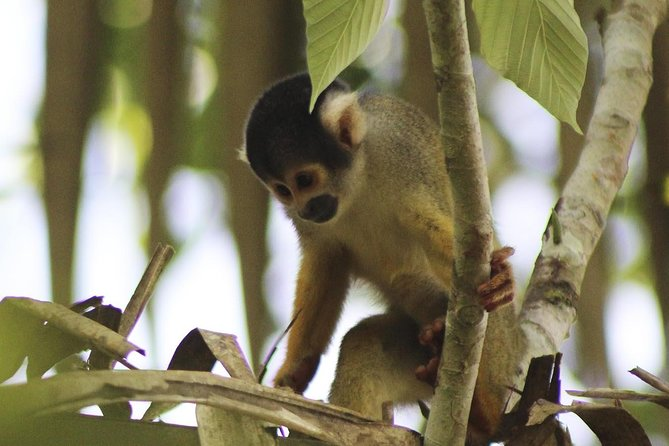 4-day Tambopata Ecolodge Rainforest Encounter Tour, Puerto Maldonado, PERU