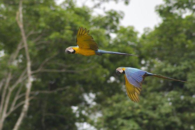 4-day Tambopata Ecolodge Rainforest Journey Tour, Puerto Maldonado, PERU