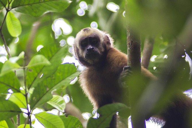 5-day Tambopata Ecolodge Rainforest Expedition Tour, Puerto Maldonado, PERU