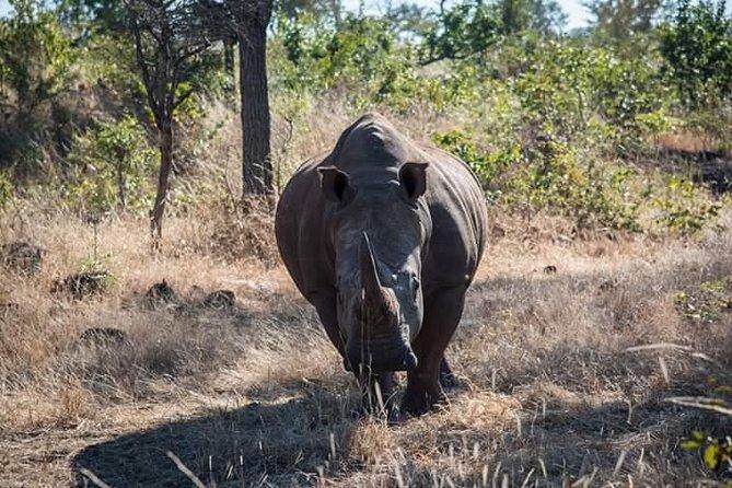Game Drive And Rhino Walk, Livingstone, ZIMBABUE
