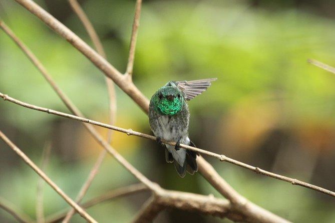 Mangrove Birding Tour, Puerto Jimenez, COSTA RICA