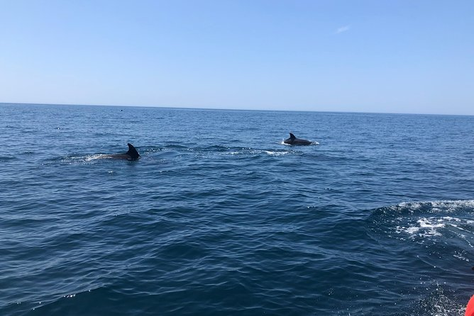 Observação de Golfinhos em Sesimbra, Distrito de Setúbal, PORTUGAL