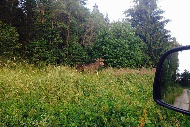 Safari por la fauna y flora al atardecer de Estocolmo, Estocolmo, SUECIA