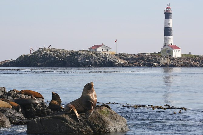 MÁS FOTOS, Victoria Marine Wildlife Tour