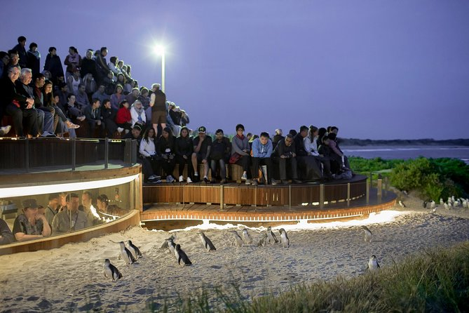 Enjoy a premium encounter with the delightful little penguins of Phillip Island! This small group Phillip Island Penguin Parade Tour from Melbourne offers great value and a very personal approach. Soak up the scenery in air-conditioned comfort on the leisurely afternoon drive from Melbourne down to the island. You'll enjoy a short walk at The Nobbies and a drive around the island to meet some of the other furry and feathered residents, before heading to the Penguin Parade Visitor Information Centre to watch the iconic Penguin Parade from the smaller premium Penguins Plus viewing area.