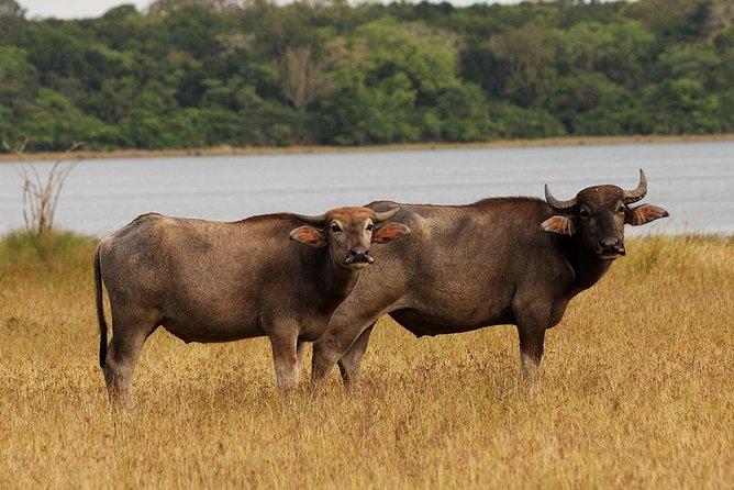 Day Excursions to Wilpattu National Park From Negombo, Negombo, SRI LANKA