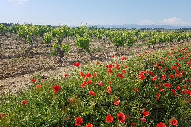Wine Tours and Vineyard Adventures In The Languedoc, Carcasona, FRANCIA