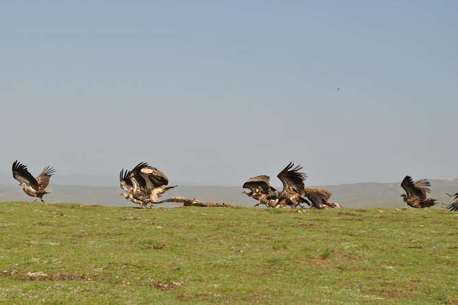 16-Day Private Trip: Birding at the Edge of the Tibetan Plateau from Lanzhou, Lanzhou, CHINA