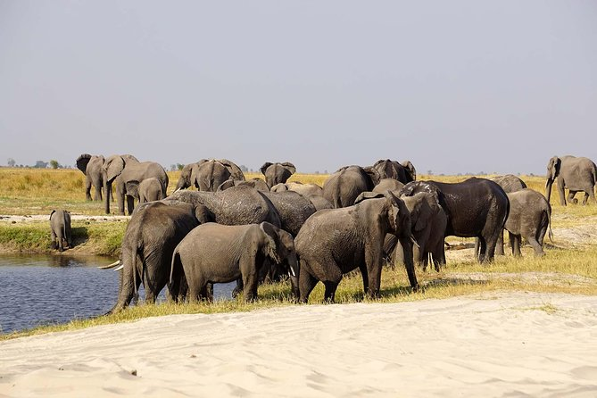 Elevate your chances of seeing animals as you spend more hours than the normal day trip.<br>There is no rush in this trip as you have all the time to capture the best photographs.<br>Cruise the Chobe river and enjoy an African sunset.<br>Visit the Chobe National Park, a place reckoned for a large population of wild animals.