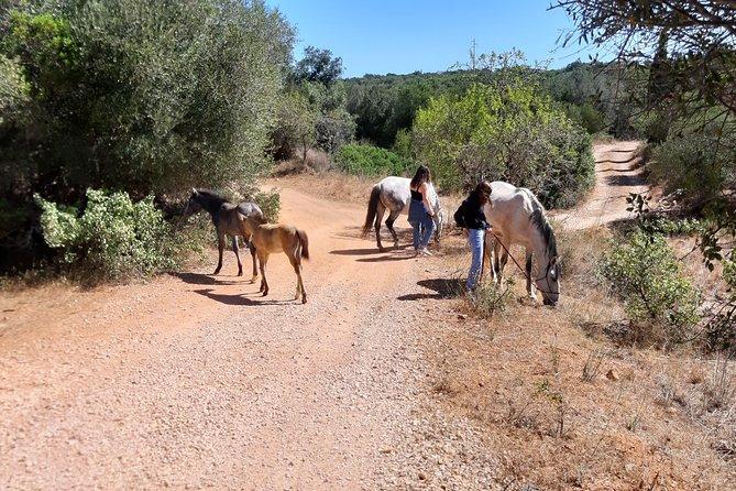 Caminhadas mágicas com cavalos e potros resgatados, Lagos, PORTUGAL