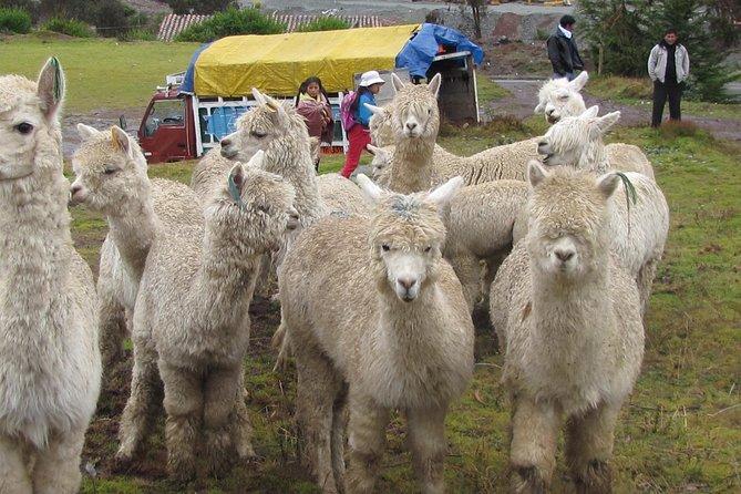 The Premium Wild Andes Quillatambo Inca Trail - Cusco to Machu Picchu (5D/4N), Machu Picchu, PERU