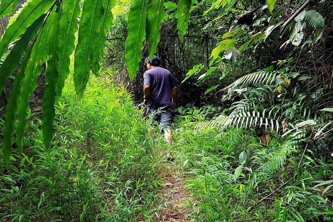 MÁS FOTOS, Khao Lak Jungle Experience