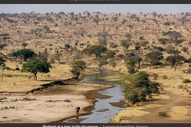 Serengeti Safari Booking does not skimp on what you came to see. Our company free pick-up and drop off from the hotels and Airports once they confirm to do a Safari with us.We also allocate good Hotels, Lodges for the travelers who didn't book.A joined group Safari provides sharing of ideas and cost among the travelers while exploring the African culture(Maasai and Barabaig) and wildlife in their habitats in a 2 by 2 seat 4WD Jeep everyone in a window seat. 1 Day Safari in Tarangire National Park provides enough time to explore the great number of wildlife specifically the big 5 Elephants in large number, Lions, Buffalos, Leopards,in a single day and other wildlife such as Zebra,Gazelle,Giraffe, different reptiles,endangered wildcats, wildebeest, baboons number of bird species including Flamingo, Dwarf Mongoose and other many.