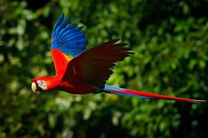Tambopata Chuncho Macaw Clay Lick 3 Days, Puerto Maldonado, PERU