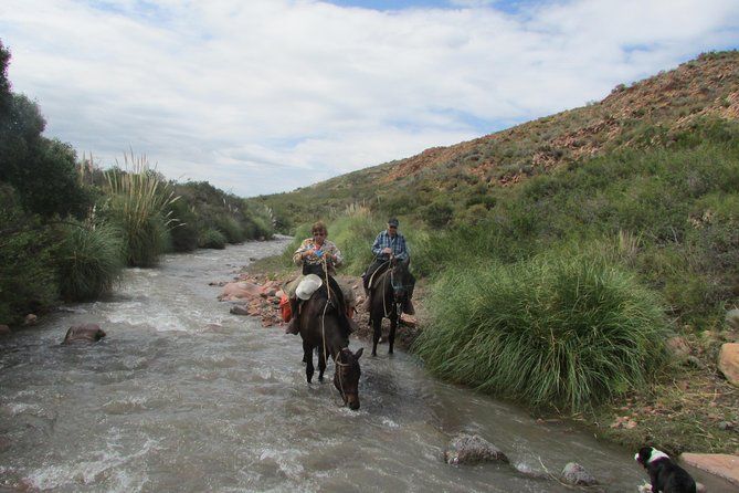 Horse riding for experienced riders at the foot of the Andes, Mendoza, ARGENTINA