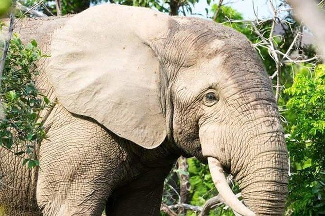 4 Days Wildlife Safari tour with Guide to Mole National Park, Mognori Eco village and the Larabanga Mosque.