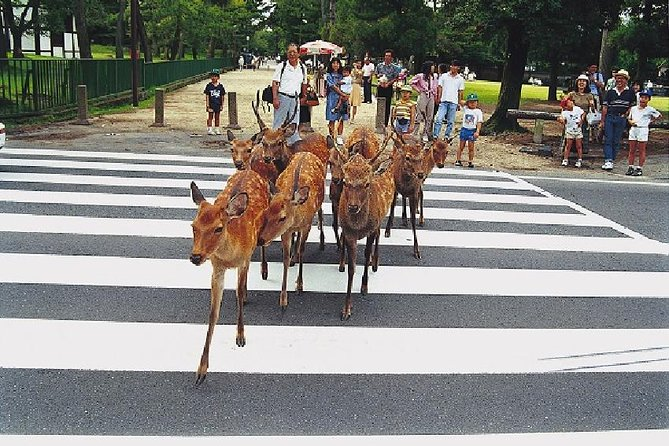 Nara Afternoon Tour - Todaiji Temple and Deer Park from Osaka, Osaka, JAPON