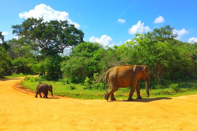 14 Day or More Days Explore Sri Lanka, Galle, SRI LANKA