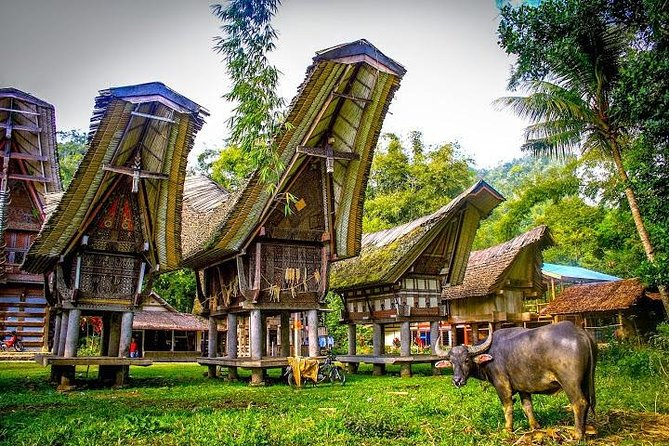 A trip that combines cultural heritage tour to see Toraja architecture, Toraja funeral, ancient menhirs and handicraft. Start from Makassar, you will be picked up from hotel in Makassar or Sultan Hasanuddin Airport at 8 AM. Start your tour to Tana Toraja, it's about 9 hours. Along the ways passes through the picturesque villages. After arrive in Toraja, visit Kete Kesu, Marante and Pallawa village to get a glimpse of Tongkonan traditional house of Toraja people. For sure you will visit the famous funeral burial in those places. Drive to Sadan Tobarana Village to see traditional hand weaving of Tobarana Toraja fabric by old women. Made from natural ingredients and deliberately woven into beautiful textile.
