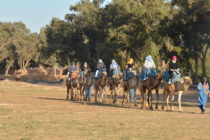 Agadir Camel riding and barbecue dinner with Hotel Transfers, Agadir, MARRUECOS
