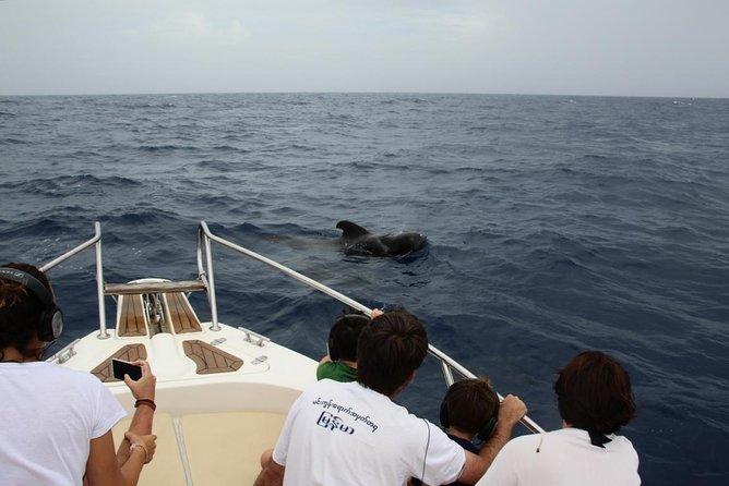 Avistamiento de cetáceos en Tenerife, Tenerife, ESPAÑA