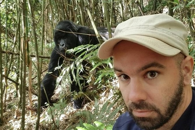 With Rwanda gorilla trekking Experience, our professional guides will take you for a 2 day visit to see the gorillas in their natural habitat. As you travel to the Volcanoes National Park, take an en-route visit to some of the cultural and historical sites like the genocide memorial site, museums, and local market. You will eventually proceed for the gorilla tracking which is the major activity of the Rwanda gorilla trekking safaris.