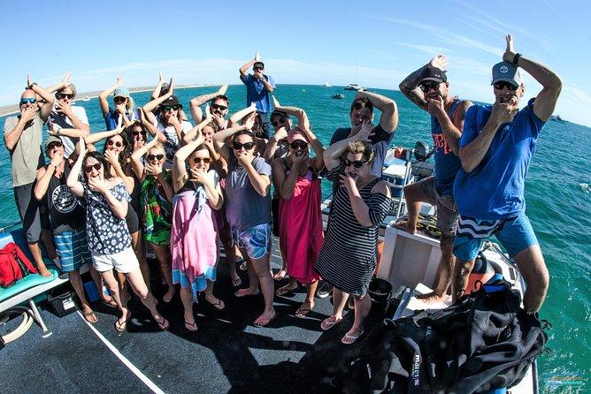 MAIS FOTOS, Humpback Whale Swim Ningaloo Reef