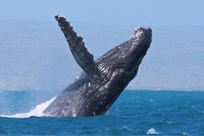 Cruise until sunset whilst looking for whales, Dolphins, Turtles & more. Enjoy snacks & a drink of bubbles as the sun sets.
