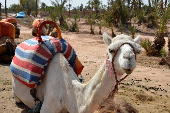 MÁS FOTOS, Marrakech Guided Tour From Casablanca With Camel Ride