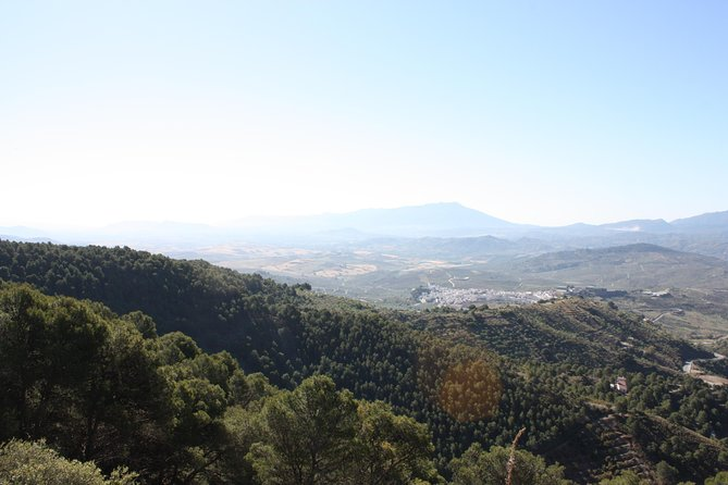 Private 4WD Pinsapo Forest Tour Sierra de las Nieves- Ecotourism - 4-7 pax, Malaga, ESPAÑA