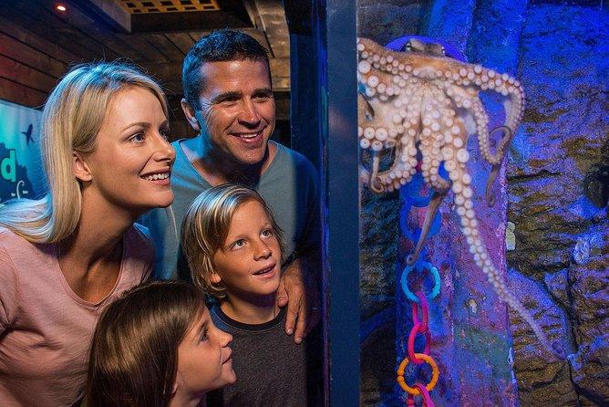 SEA LIFE Sunshine Coast Aquarium Entrance Ticket, Noosa y Sunshine Coast, AUSTRALIA