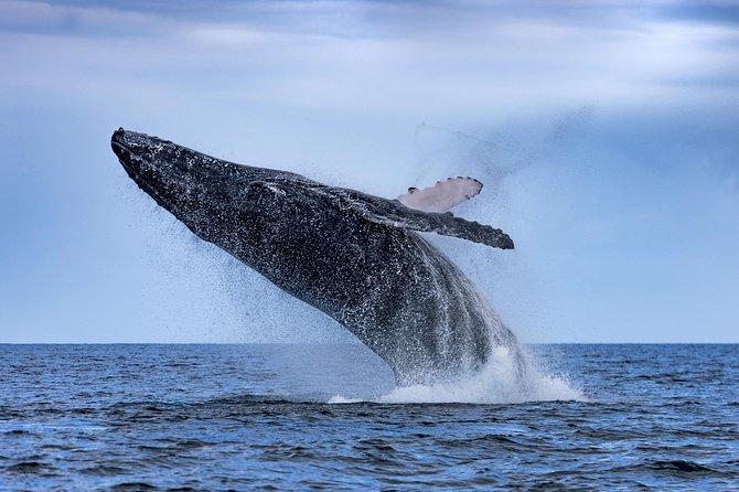 Whale Watching, Noosa y Sunshine Coast, AUSTRALIA