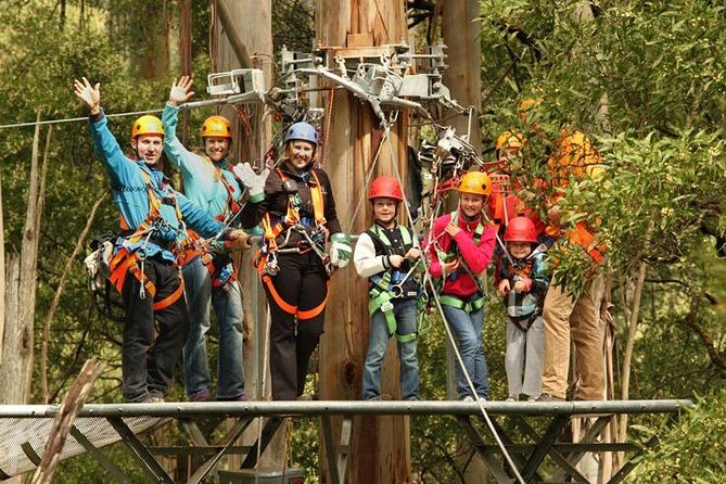 Otway Fly Treetop Adventures Admission Including Zipline Tour, ,