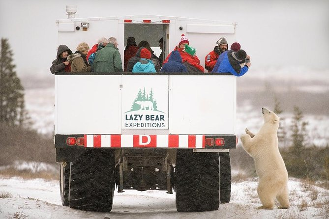 5 nights Churchill, Polar Bears & Northern Lights adventure from Winnipeg, Churchill, CANADÁ