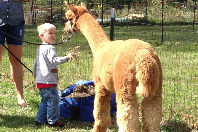 Get up close and personal with one of the most unique and adorable livestock breeds around! Shop for unique alpaca gifts!