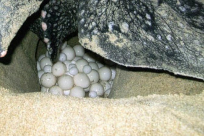 Night Turtle Nesting Tour from Tamarindo, Tamarindo, COSTA RICA