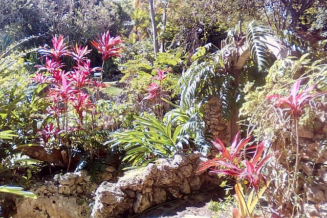 Andromeda Botanic Gardens is the original garden of Barbados and provides visitors with an authentic garden experience. It was created as a private retreat by our most famous gardener, the scientist Iris Bannochie. Heritage, beauty and education - the perfect garden tour.